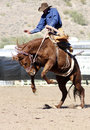 Rodeo Bucking Bronc Rider Stock Image