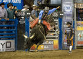 Rodeo bull rider cowboys Royalty Free Stock Photo