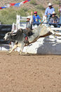 Rodeo Bull Riding Royalty Free Stock Photo