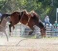 rodeo an extreme sport
