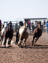 Rodeo horses Stock Photo