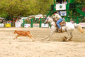 Rodeo south calf roping at the myrtle creek douglas in early june Stock Photo