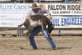 Rodeo Tie Down Roping Stock Photo