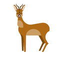 Roe deer illustration of on white background Stock Photos