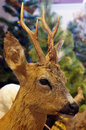 Roe deer portrait taxidermy Royalty Free Stock Photo