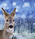 Roe - doe , red deer in winter forest Stock Image