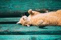 Roliga röda kitten cat sleeping on bench in parkerar den varma sommardagen Fotografering för Bildbyråer