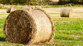 Rolled hay closer look Royalty Free Stock Image