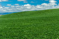Rolling farm field of green wheat Royalty Free Stock Photo