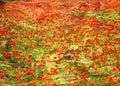 Field of poppy`s impressionist style. Royalty Free Stock Photo