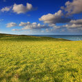 Rolling green hills under the blue sky in katiki point new zealand Royalty Free Stock Image