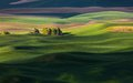 Rolling hill and farm land green wheat fields Royalty Free Stock Images