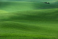Summer rolling hills with fields of wheat and trees. Amazing fairy minimalistic spring landscape with green grass fields Royalty Free Stock Photo