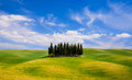 Rolling hills, green fields and cypresses trees in Tuscany, Ital Royalty Free Stock Photo