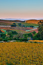 Rolling Hills of Napa California Stock Photography