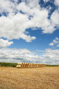 Rolls of hay bales in field a neat row a midwest farm Royalty Free Stock Photography
