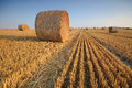 Rolls of hay on the field after harvest Royalty Free Stock Photo