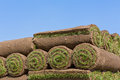 Rolls of sod pallets for new lawn with text space Stock Photography