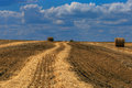 Rolls of straw on the harvested field Royalty Free Stock Photo