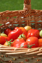 Roma tomatoes in a basket Royalty Free Stock Photos