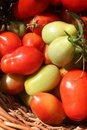 Roma tomatoes in s basket Stock Photography
