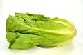 Romain lettuce green on a white background Royalty Free Stock Photography