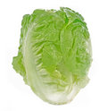 Romain Lettuce isolated on  white background Royalty Free Stock Photo