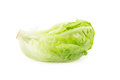 Romain Lettuce isolated on a white background. Royalty Free Stock Photo