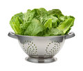 Romain Lettuce in a Stainless Steel Colander Royalty Free Stock Photo