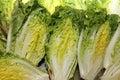 Romaine Lettuce Hearts Royalty Free Stock Photo