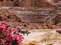 Roman Amphitheatre in Petra Royalty Free Stock Photo