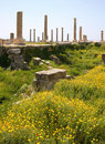 Roman Columns, Tyre (Lebanon) Royalty Free Stock Photo