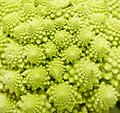Romanesco broccoli close up Royalty Free Stock Photo