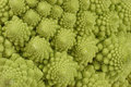 Romanesco cauliflower background Stock Image