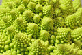 Romanesko broccoli macro of a Stock Photos
