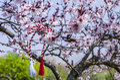 Romanian Spring Symbol Martisor