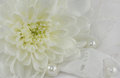 Romantic abstract background with colorful chrysanthemum pearls and white lace suitable for wedding invitation card Royalty Free Stock Photo