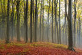 Romantic atmosphere during mist int he forest in fall mystic fairytale autumn Stock Photography