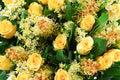 Romantic Beautiful orange flowers Royalty Free Stock Photo