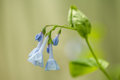 Romantic Bluebell Flowers In M...