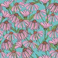 Romantic floral seamless pattern with beautiful echinacea flowers, stems and leaves on blue background. Flowering herb