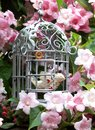 Romantic garden shabby chic metal bird cage with vintage bird amongst pink blossom Royalty Free Stock Photo