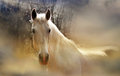 Romantic horse white mare worth pondering Royalty Free Stock Images