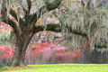 Romantic landscape of an old southern moss covered live oak tree extending its branches toward a lake where the colors of spring Royalty Free Stock Photos
