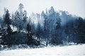 Romantic restful snowy woods and blue morning with mist Stock Images