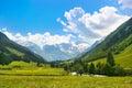 Romantic Summer Nature Landscape