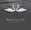 Romantic swan couple Stock Photo