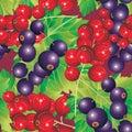 Rood en Black-currant Royalty-vrije Stock Afbeelding