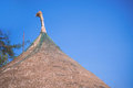 Roof Of Bamboo Hut Royalty Free Stock Photo