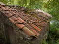 Roof detail in nature outdoors Stock Images